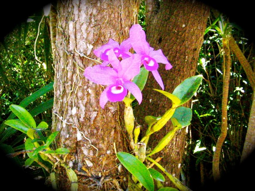 costa-rica-flower1