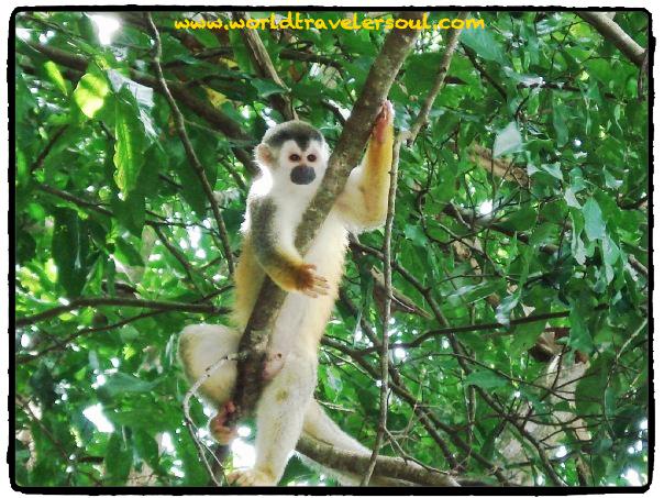 Uno de los lugares con mayor biodiversidad de la Tierra. Costa Rica.