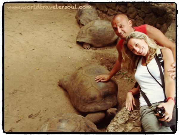 Tortugas gigantes en Chamarel. Mauricio